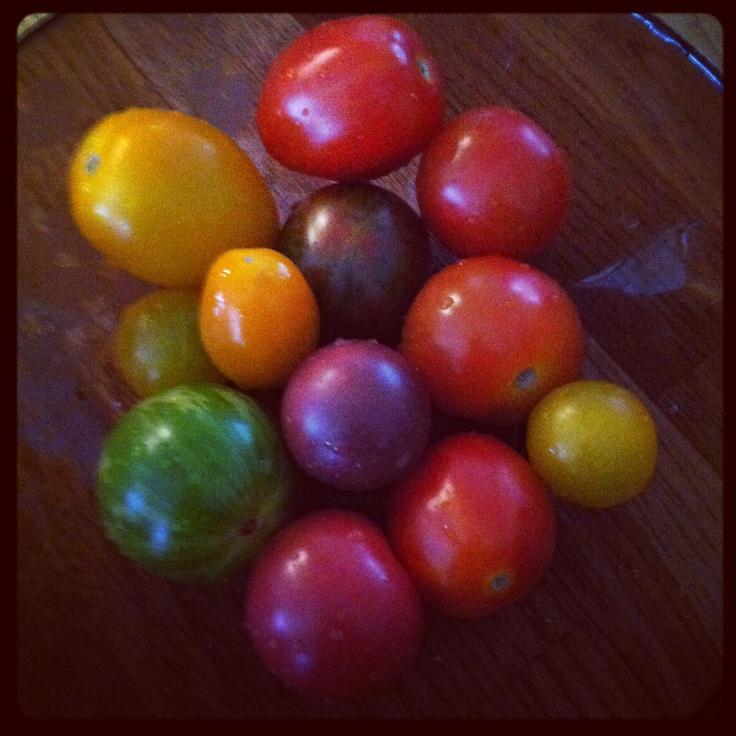 Fina tomater från Skilleby