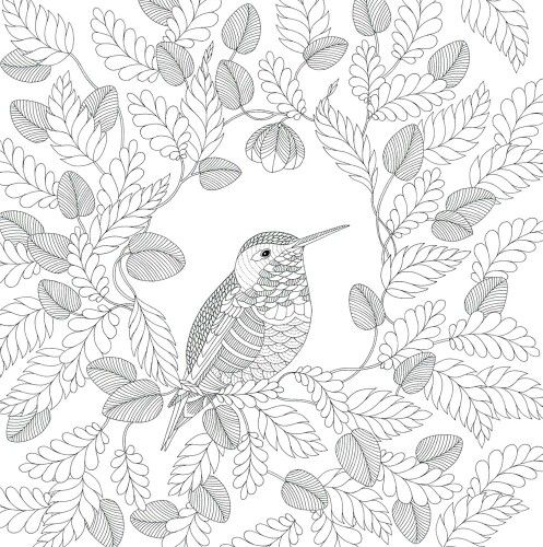 bird paracolorir coloring