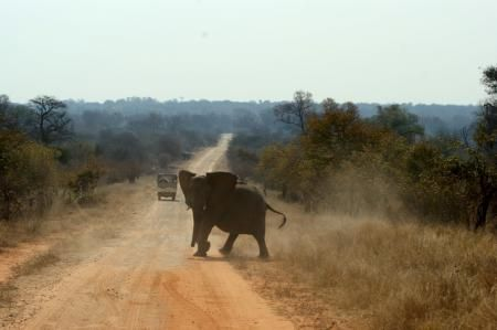 Angry Elephant in Caprivi Strip This Elephant did not like is when we were in the Bwabwata National Park in the Capriv