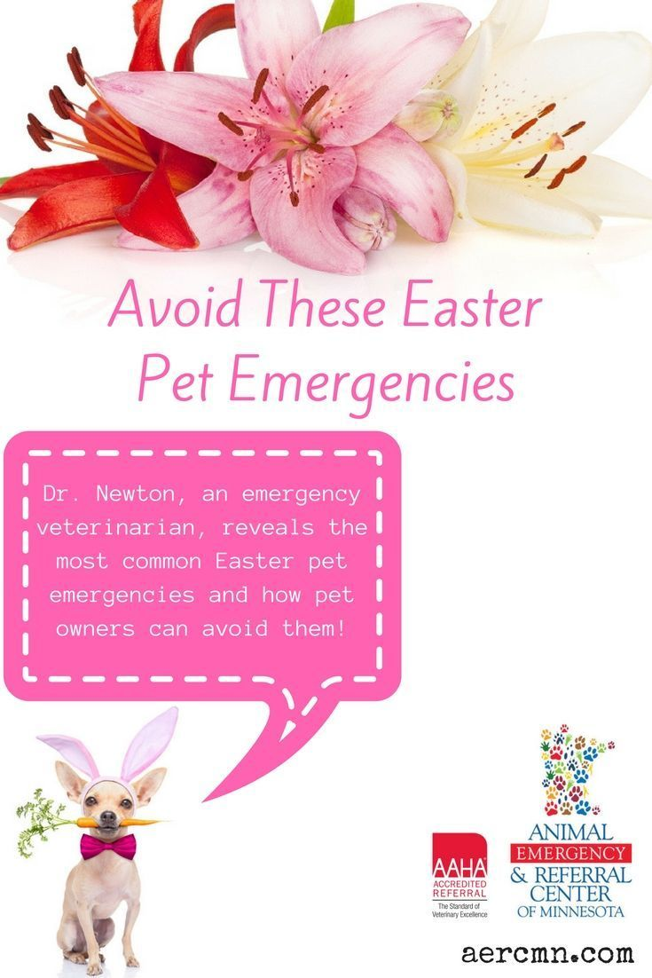 Avoid These Easter Pet Emergencies Easter Pets Pet Emergency Pets