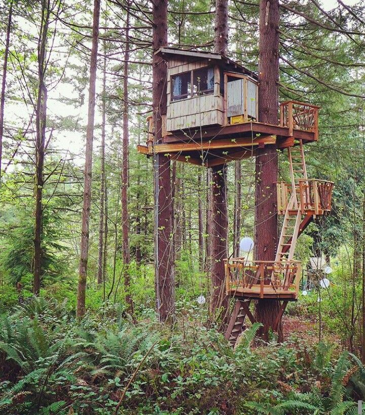 260 best images about tree houses in deer stands on for Hunting hut plans