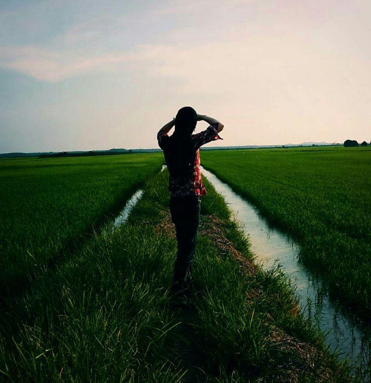 I love paddy fields~ - Kedah, Malaysia