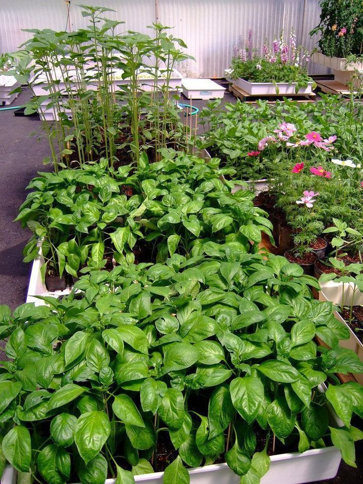 Hydroponic gardening for beginners Greentrees