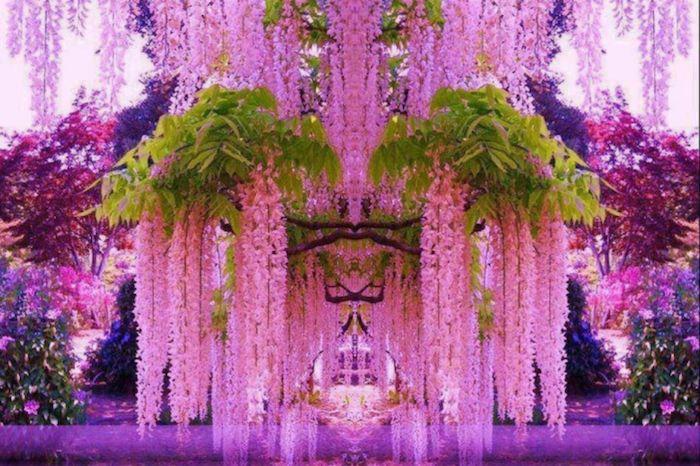 東京から飛行機と車で3時間ほどで、まるで「妖精の世界」のような絶世の景色に巡り会える。このファンタジー感が溢れている、花に囲まれたトンネルがあるのは福岡県の「河内富士ガーデン(河内藤園)」。ピンク、紫、青、そして白の組み合わせのガーデン内で観光客に最も人気なスポットだ。