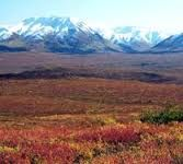 Image that shows a portion of the Arctic Tundra landscape. Arctic tundra is found across northern Alaska, Canada, and Siberia