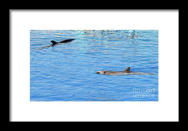 Friendly Dolphin In Blue Water Framed Print