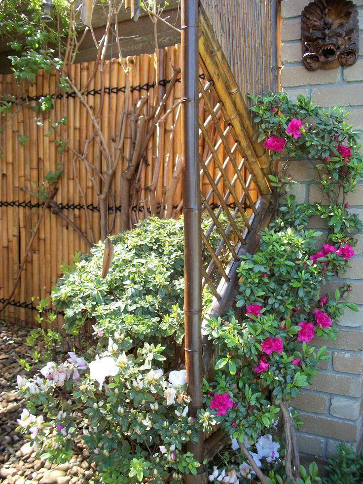2013 Azalea and bamboo fence