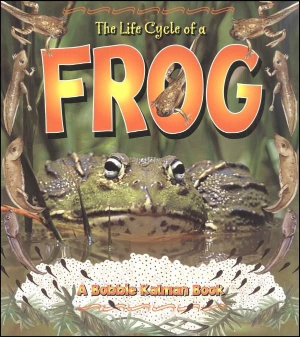 """a study of the history of frogs """"it was exhilarating to hold these small fossils up to the light to reveal the frogs  frogs based at the natural history  study the diets of these frogs."""