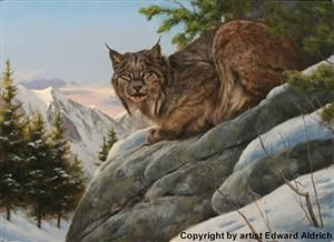 Wildlife Society print honoring the CPW's efforts to reintroduce the Canada lynx (2004). Copyright by Edward Aldrich.