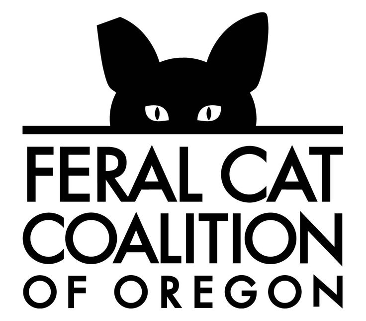 The Feral Cat Coalition of Oregon is a great organization to take feral cats to for Spay/Neuter services for a suggested donation of only $30.