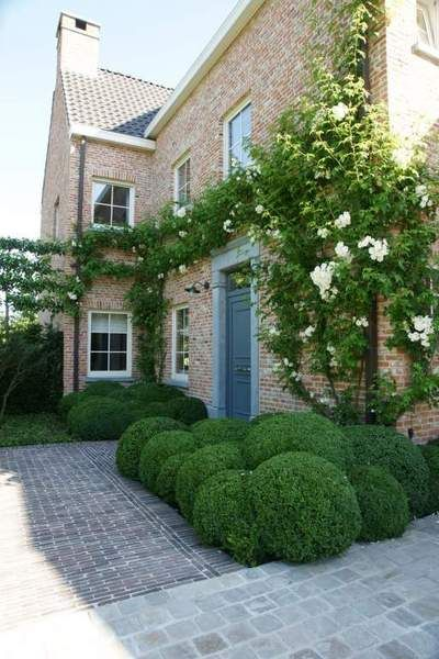 Horticultural guided climbing rose Rosa 'Boby James' at the front door in combination with boxwood.
