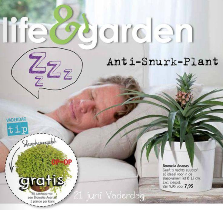PSST... had jij deze anti-snurk-plant al gezien bij Life&Garden. Het perfecte cadeau voor vaders die snurken!