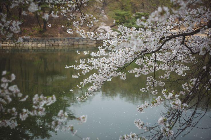 2016 봄 – 아르디스 포토그라피 (ardis photography)