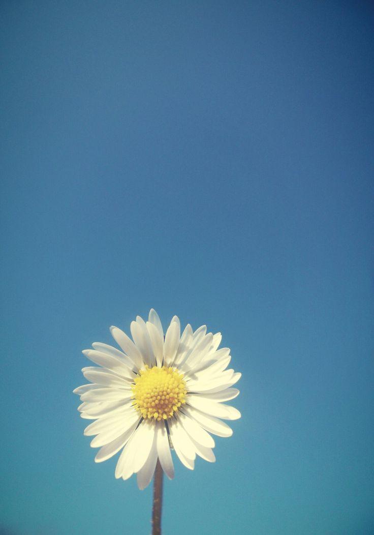 albastru crud de primăvară