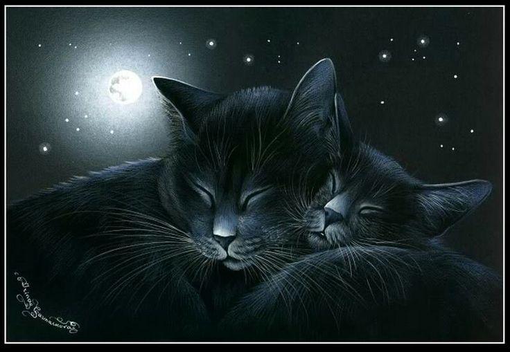 Кот ночью картинка