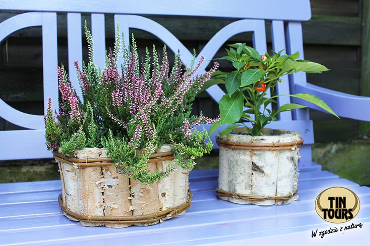 Osłony na kwiaty wykonane z pieńków brzozy