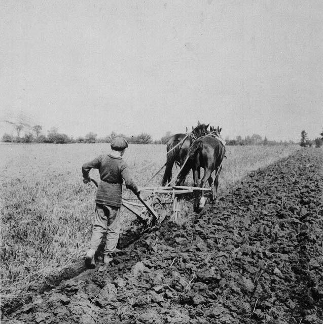 Boy ploughing, Manitoba, 1900