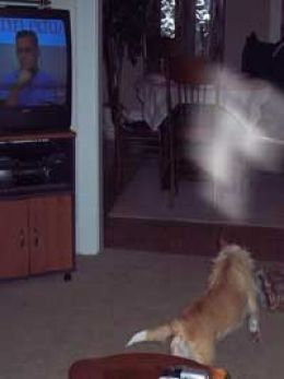 The Paranormal :: Can Dogs See Ghosts? Yes! All cats and dogs can sense the spirits. Just like they know before an earthquake is about to happen.