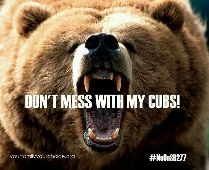 Don't mess with Mama Bears!!! Baby & Kid care Animals