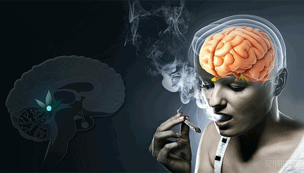 This Is What Happens In The 3rd Eye When We Smoke Cannabis…