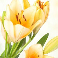 Iti doresc sa ai o zi asa cum o visezi! La multi ani, draga mea!  http://ofelicitare.ro/felicitari-de-la-multi-ani/la-multi-ani-draga-mea-729.html