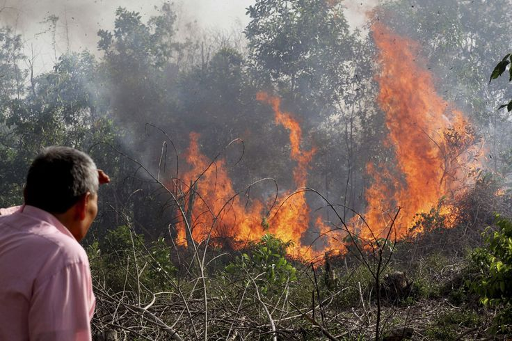 """A man looks at a fire as it burns through a peatland forest in Rumbai Pesisir, Riau province, Indonesia, on June 20, 2013. Smog fueled by forest fires in Indonesia has caused Singapore's main measure for air pollution to surge to an all-time high and breached a """"hazardous"""" classification that can aggravate respiratory ailments. Nearby Malaysia closed 200 schools and banned open burning in some areas."""