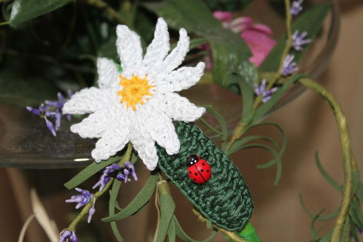margherite daisy