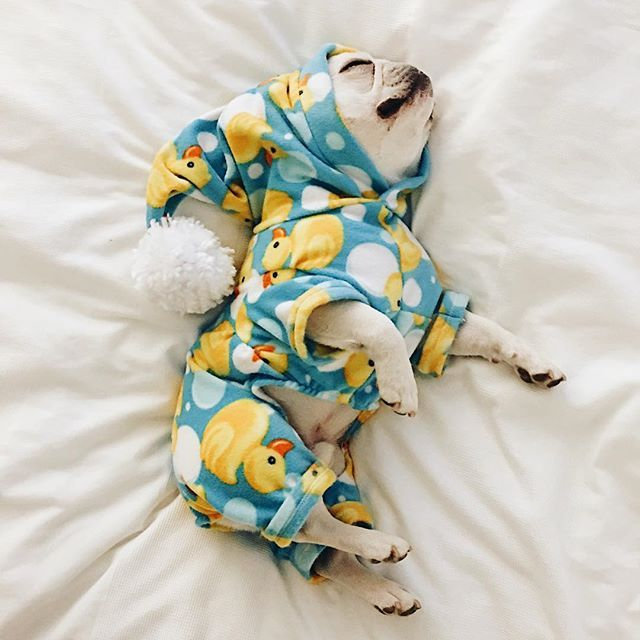 Theo, the French Bulldog wearing his 'Rubber Ducky Onesie, @theobonaparte on instagram.