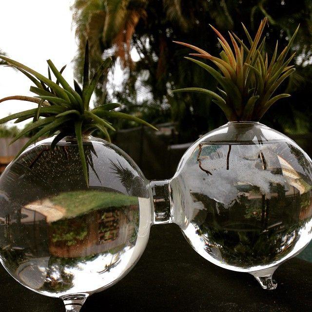 #myplants #airplants #Garden #Gardenideas
