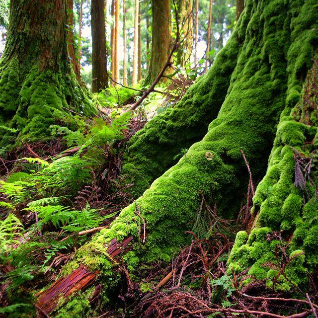 mossy trees.
