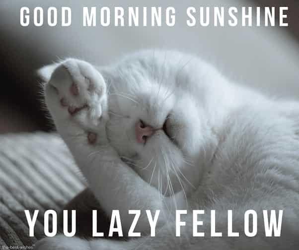 Cute Good Morning Sunshine Meme Best Collection Good Morning Sunshine Funny Dog Images Good Morning