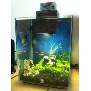Pinterest the world s catalog of ideas for Fluval chi fish tank