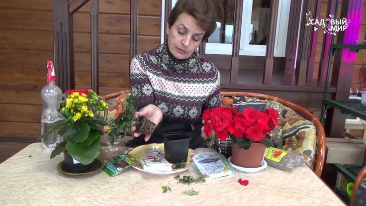 Как сохранить миниатюрную розу