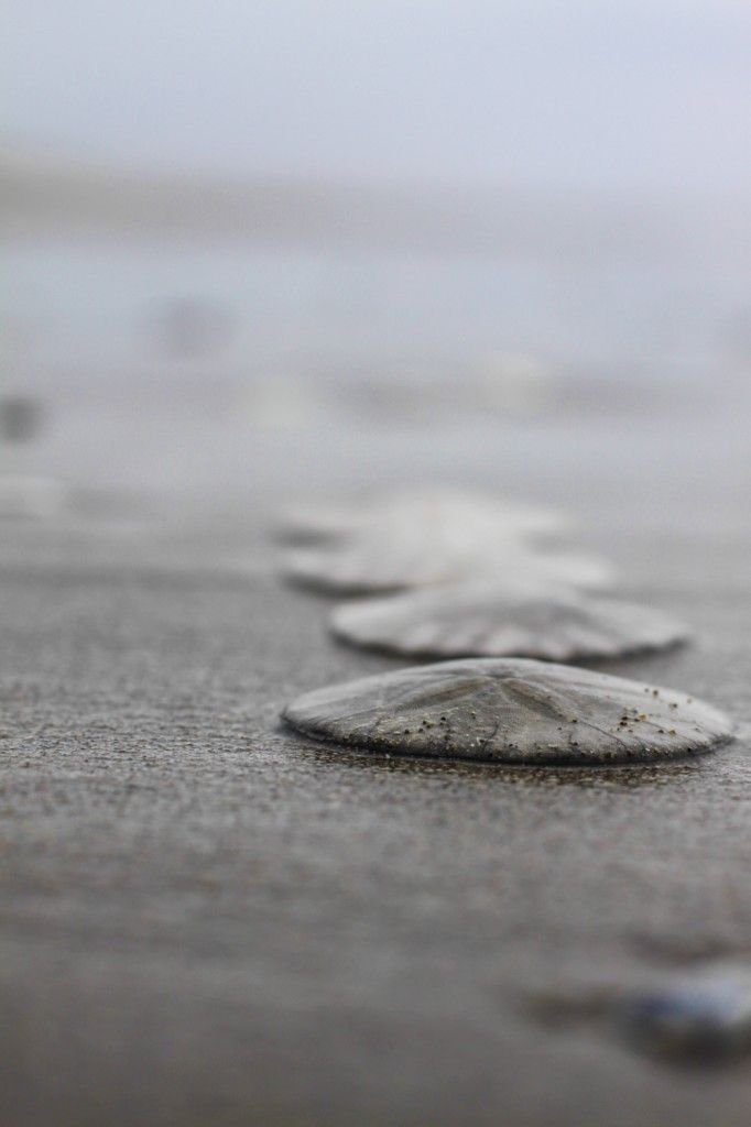 Beautiful shot -- TheNoisyPlume.com/blog ///   pinned by my daughter.  I love it too.  Sand Dollars in a row.