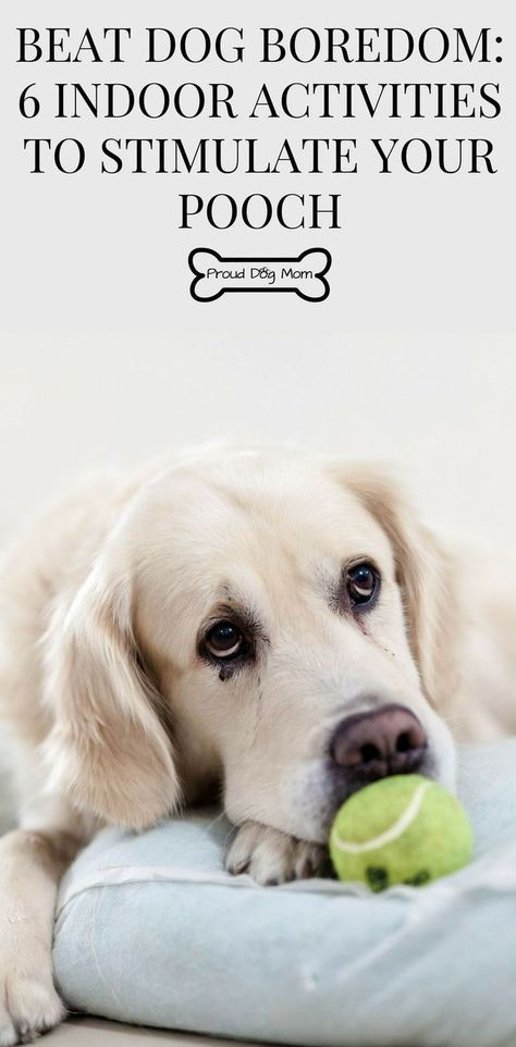 6 Indoor Dog Activities To Keep Your Pooch Stimulated