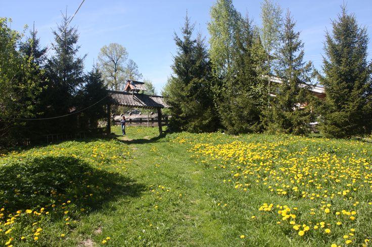 Вид от Купеческого дома. Вариант 2 для проведения церемонии