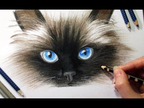 Drawing Cat's face in colored pencil ► Jasmina Susak How to draw a cat cómo dibujar un gato - YouTube