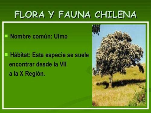 flora y fauna chilena (1)