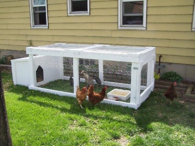 17 best images about the old homestead on pinterest root for Chicken enclosure ideas