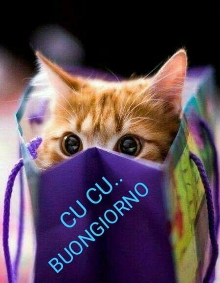 Pin di laura ferrario su buon giorno gattini gatti for Buongiorno con gattini
