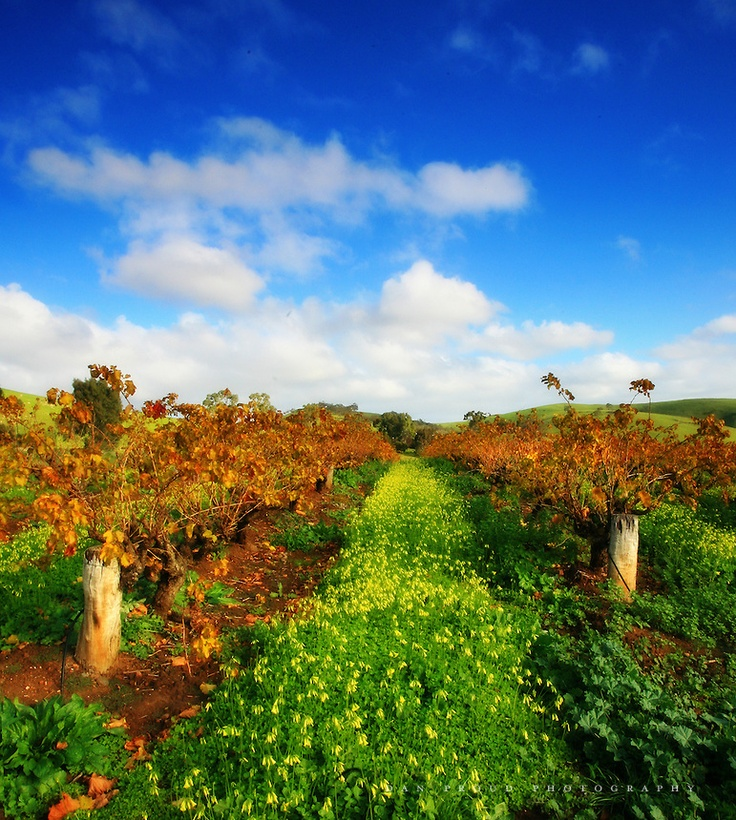 The beautiful Barossa Valley, South Australia!