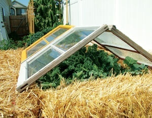 Year-Round Gardening:Our Best Plans for Greenhouses, Hoop Houses,Cold Frames and More
