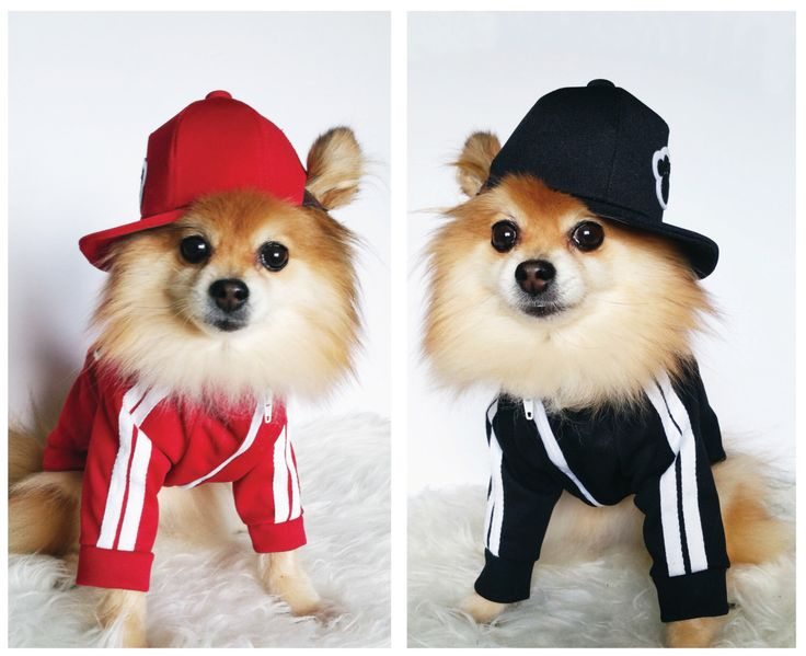 SNAPBACKS para perros, gatos! Sombreros de perro hecho a mano, tapas de perro, sombrero de béisbol, snapback gorra, chicas snapback, accesorios para mascotas, Perro sudaderas, ropa de perro de puppydoggyclothes en Etsy https://www.etsy.com/es/listing/456397818/snapbacks-para-perros-gatos-sombreros-de