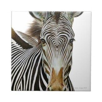 Heart shape pattern on zebras head.