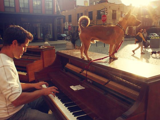 Language of the Universe >>> Super Cool Kickstarter project- a man travels from US to Central America with a piano & his dog spreading music wherever he goes and bringing music to everyone! Very cool. I just backed them with $ 25 - hope he makes it! Here's the link: http://www.kickstarter.com/projects/dotannegrin/language-of-the-universe