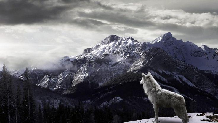 Animal wallpaper hd desktop 3D 4K wild Animal wallpaper for desktop background image download