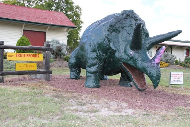 Size is 2.1 m × 6.7 m (6.9 ft × 22 ft).  Also known as 'The Big Triceratops' or 'Fruitisforus', this large fibreglass triceratops was originally used as a float in the 1998 Apple  Grape Festival. After the festival, residents placed it on the roadside to help sell fruit for a local fundraiser, and it became a popular landmark. The triceratops was refurbished in 2009 to repair weather damage and then returned to its original post in front of the Ballandean Queensland railway station