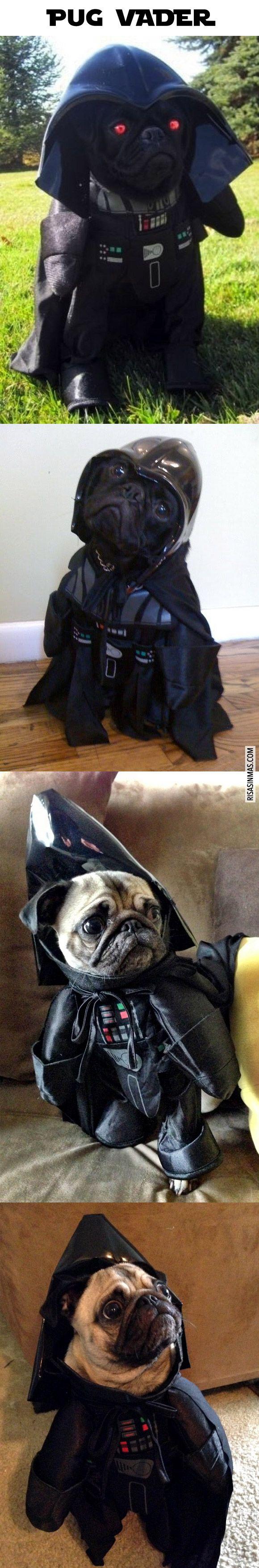 Recopilación de fotografías de pugs disfrazados de Darth Vader.