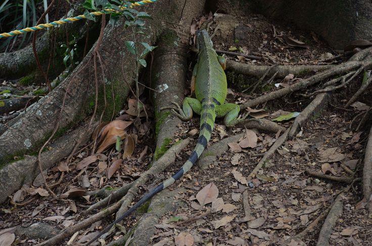 Jardín Botánico de Medellín.