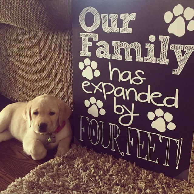Yellow Lab Puppy New Puppy Announcement Our Family has Expanded by Four Feet Printable Chalkboard File